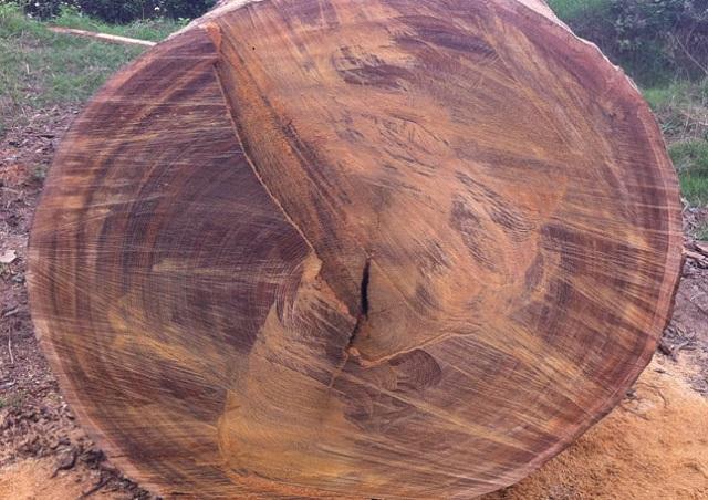 Danh sách các loại gỗ quý thuộc nhóm 2 gồm những loại gì?