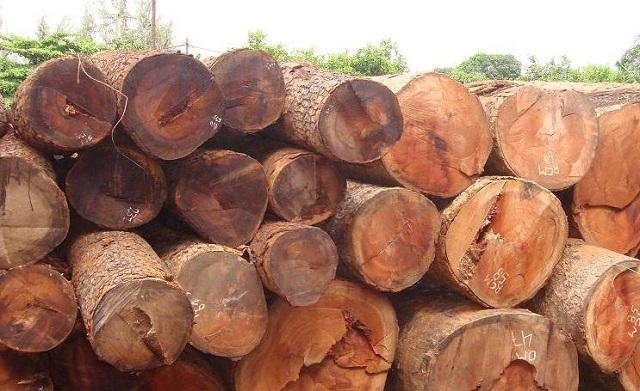 cây gỗ gõ đỏ