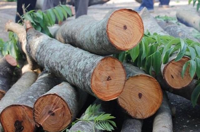 gỗ nhập khẩu