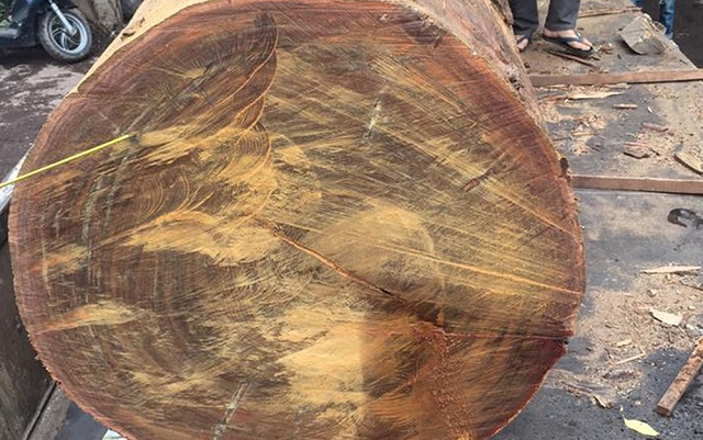 Cách nhận biết gỗ Lim như thế nào?